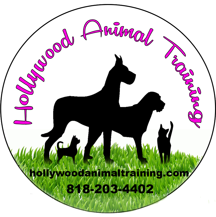 Hollywood Animal Training Basic Obedience Specializing In Film Television Training