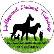 Hollywood Animal Training
